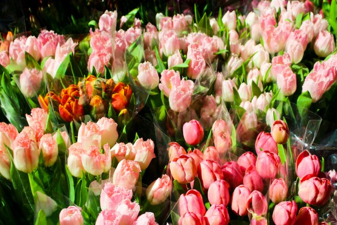 Schedule a time to visit the NYC Flower Market