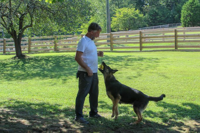 training canines for military and police