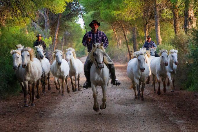 gardian camargue horse photography